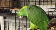 Bird_004