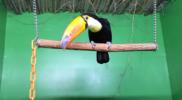 Bird_006