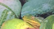 Reptiles_003