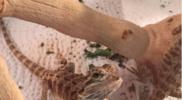 Reptiles_007