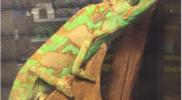 Reptiles_008