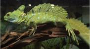 Reptiles_011