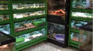 Reptiles_012