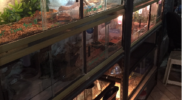 Reptiles_013