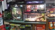 Reptiles_017
