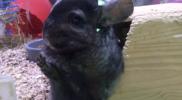Small_Animals_002