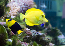 Long Island Aquariums, Fish Tanks, Exotic Fish and More!