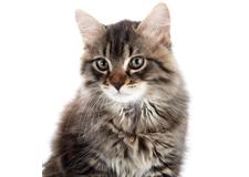 Cats Supplies Long Island