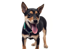Dog Supplies Long Island