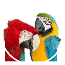 Exotic Birds Long Island