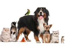 Pet Supplies Long Island