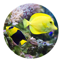 Aquariums and fish tanks