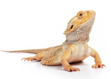 Reptiles For Sale on Long Island
