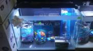 aquarium-kits