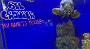 aquariums-bumble-bee-grouper