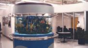 aquariums-custom-aquarium-tanks