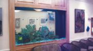 aquariums-custom-aquariums