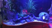 aquariums-custom-fish-tanks
