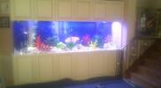 aquariums-custom-fishtanks-long-island