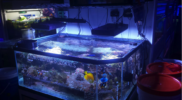 aquariums-salt-water-coral-for-sale