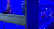 aquariums-salt-water-fish-for-sale