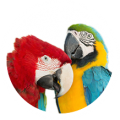 BTJ\'s Jungle Birds
